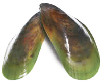 greenlipped-mussels
